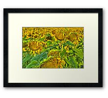 Catching The Rays Framed Print