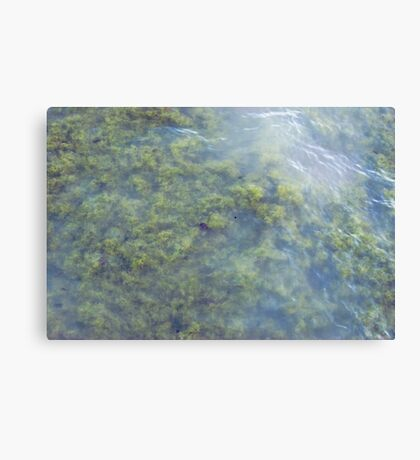 Nothing Clever Canvas Print