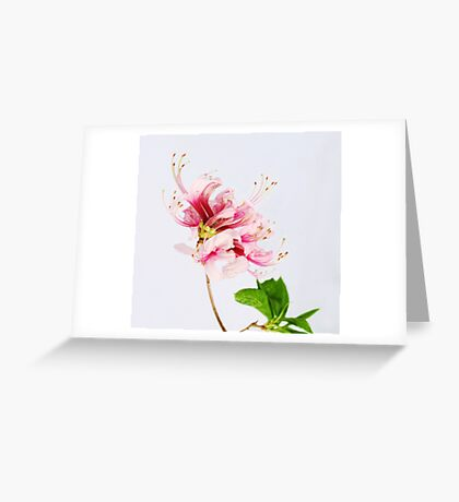 The Wild Azalea Greeting Card