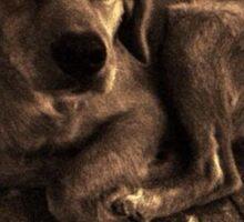 Stray Dog of Sorrento Sticker