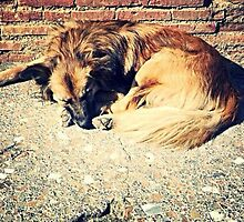 Stray dog of Pompeii by justmelizzy