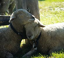 Love Ewe Sheep by ValeriesGallery