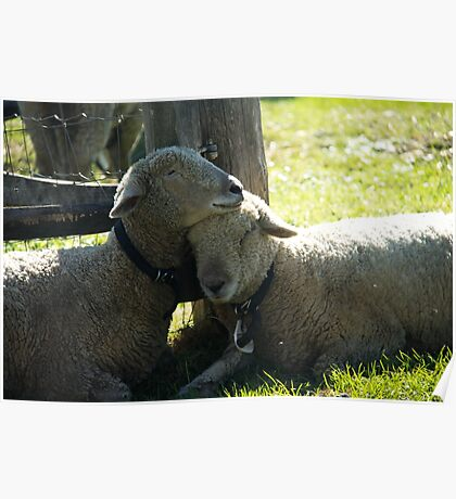 Love Ewe Sheep Poster