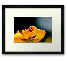 You`re Bugging Me! Framed Print