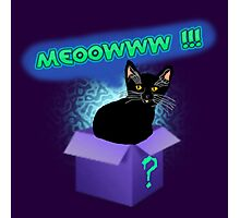 Mystery Cat In The Box Photographic Print