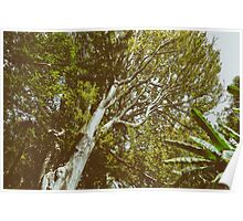 Green Tree Foliage In Summer Poster