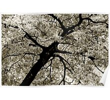 Tree Foliage Abstract Poster
