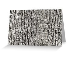 Tree Bark Background Texture Greeting Card