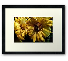 Are These Your Mums? Framed Print