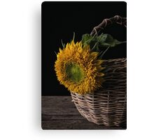 Sunflower in a basket Canvas Print