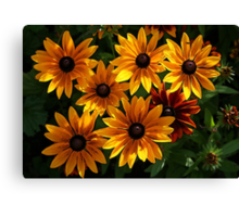 Orange Daisies Canvas Print