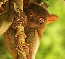 Philippine tarsier by REPTILICIOUS