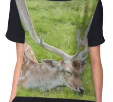 Fallow Deer sleeping on grass Chiffon Top