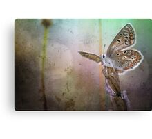 Look what I can ... Canvas Print