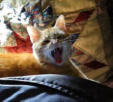 A big yawn by vigor