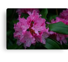 Amazing Azalea Canvas Print