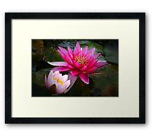 Glowing Water Lilies Framed Print