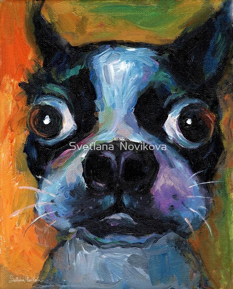 Cute Boston Terrier puppy dog portrait by Svetlana Novikova by Svetlana  Novikova
