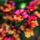 Summer Colours by Kasia-D