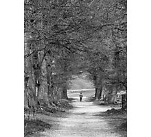 Avenues Photographic Print
