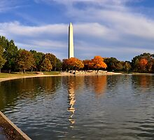 Season of change - Washington D.C. by Matsumoto