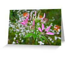 Spider Flower Greeting Card