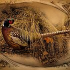 Ringed-Neck Pheasant by CarolM
