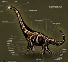 Brachiosaurus Skeleton Study by Thedragonofdoom