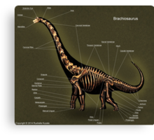Brachiosaurus Skeleton Study Canvas Print