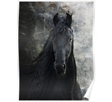 Young Frisian Stallion Poster