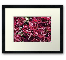 Texture with pink purple leaves. Framed Print