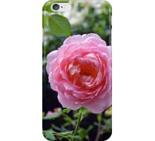 Pink rose on a natural green leaves background. iPhone Case/Skin