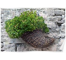 Wooden horn with plants on a stone wall. Poster