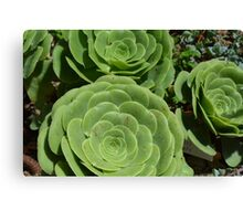Pattern with succulents. Canvas Print