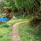 Hiking Track To The Trig by Michael McGimpsey
