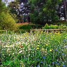 Summer meadow commemoration of WW1 by MikeShort