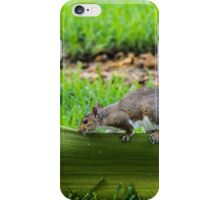 A funny squirell animal iPhone Case/Skin