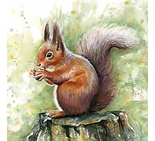 Nutty Squirrel Watercolor Art Photographic Print