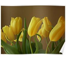Yellow, My Favorite Tulips Poster
