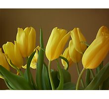 Yellow, My Favorite Tulips Photographic Print