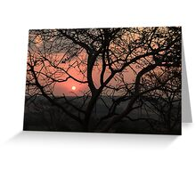 sunset with silhouetted tree Greeting Card