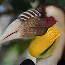 The Hornbill by byronbackyard