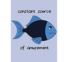 Amusement Fish Photographic Print