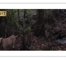 Zone 20: Forest Gateway Protected Forest Habitat:  Pic 13 of 13 - River Sticker