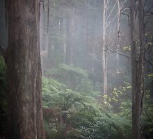 Deep in the Forrest by Andrew Wilson