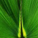 Greens by PhotosByHealy