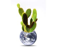 whole world is a cactus Photographic Print