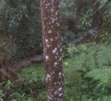 Zone 20: Forest Gateway Protected Forest Habitat: Pic 12 of 13 Soapbark Tree (No Text) Sticker