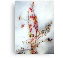 Winter Red Barberries Canvas Print
