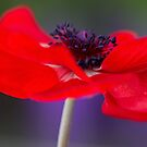 ANEMONE IN LOVE by Bloom by Sam Wales